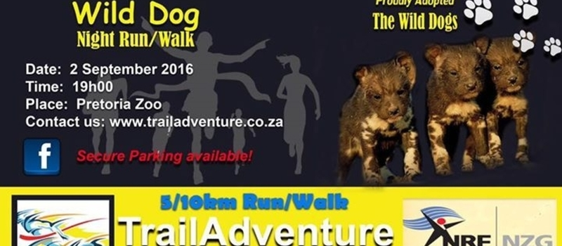 Wild dog walk and run in the ZOO