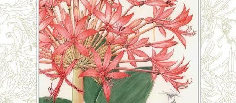 Book Launch And Exhibition: The Amaryllidaceae of South Africa