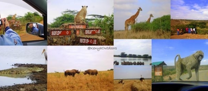 TembeaKenya;Sunday Afty Nairobi National Park Game Drives;2500/=