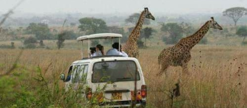 NAIROBI NATIONAL PARK GAME DRIVE, GIRAFFE CENTER & BOMAS OF KENYA!!!