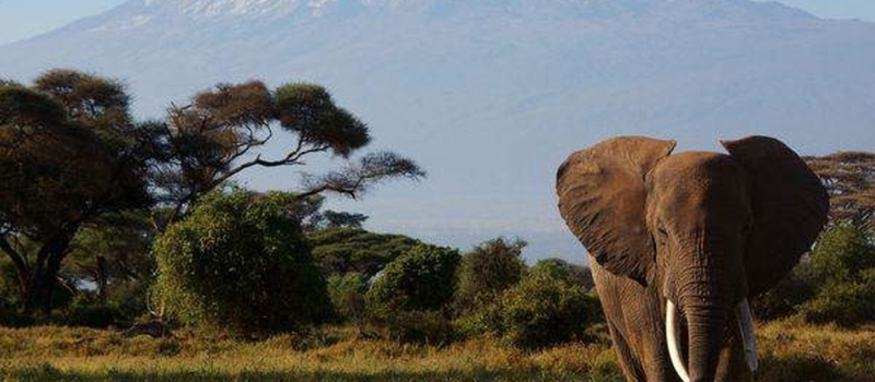 Marvels of Amboseli - Kenya-