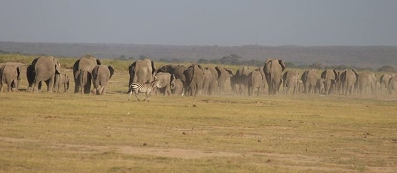 Amboseli 2Days Safari Overnight at Kibo Safari Camp