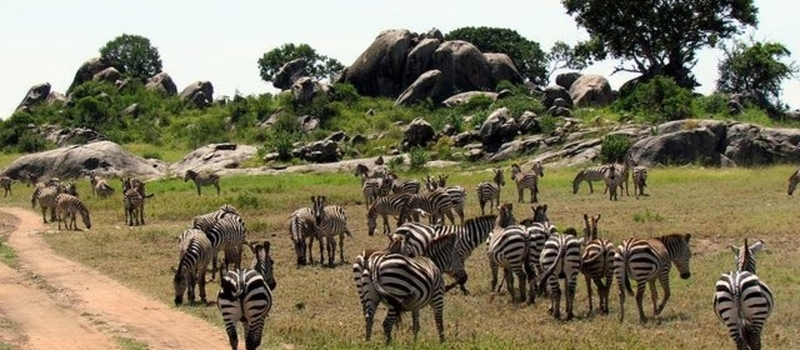 11 DAY Kenya-Tanzania Budget Group Safari